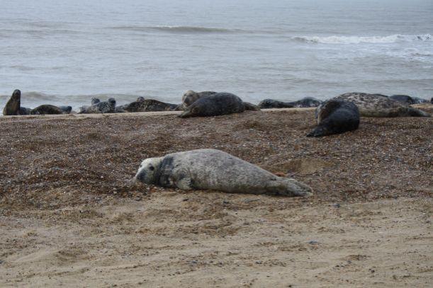 Greay seals